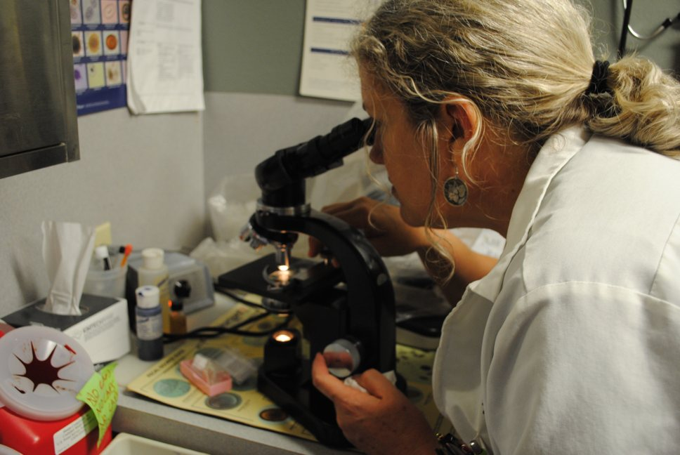 Doctor Emily Taylor examines a specimen through a microscope