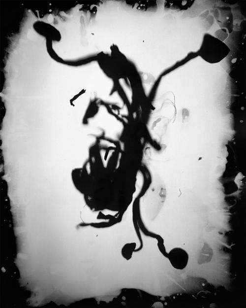 "Shimeji (Yuggoth), 2013.   8x10"" silver gelatin paper negative"