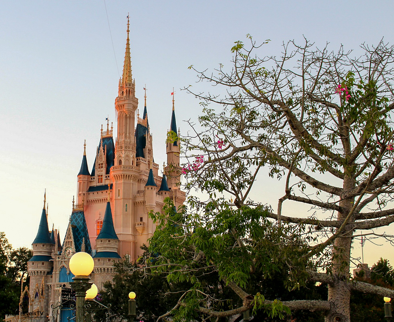 Disney Stock Photo-56.jpg