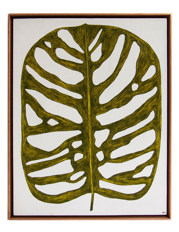 Monstera ObliquaMHwebsite.jpg