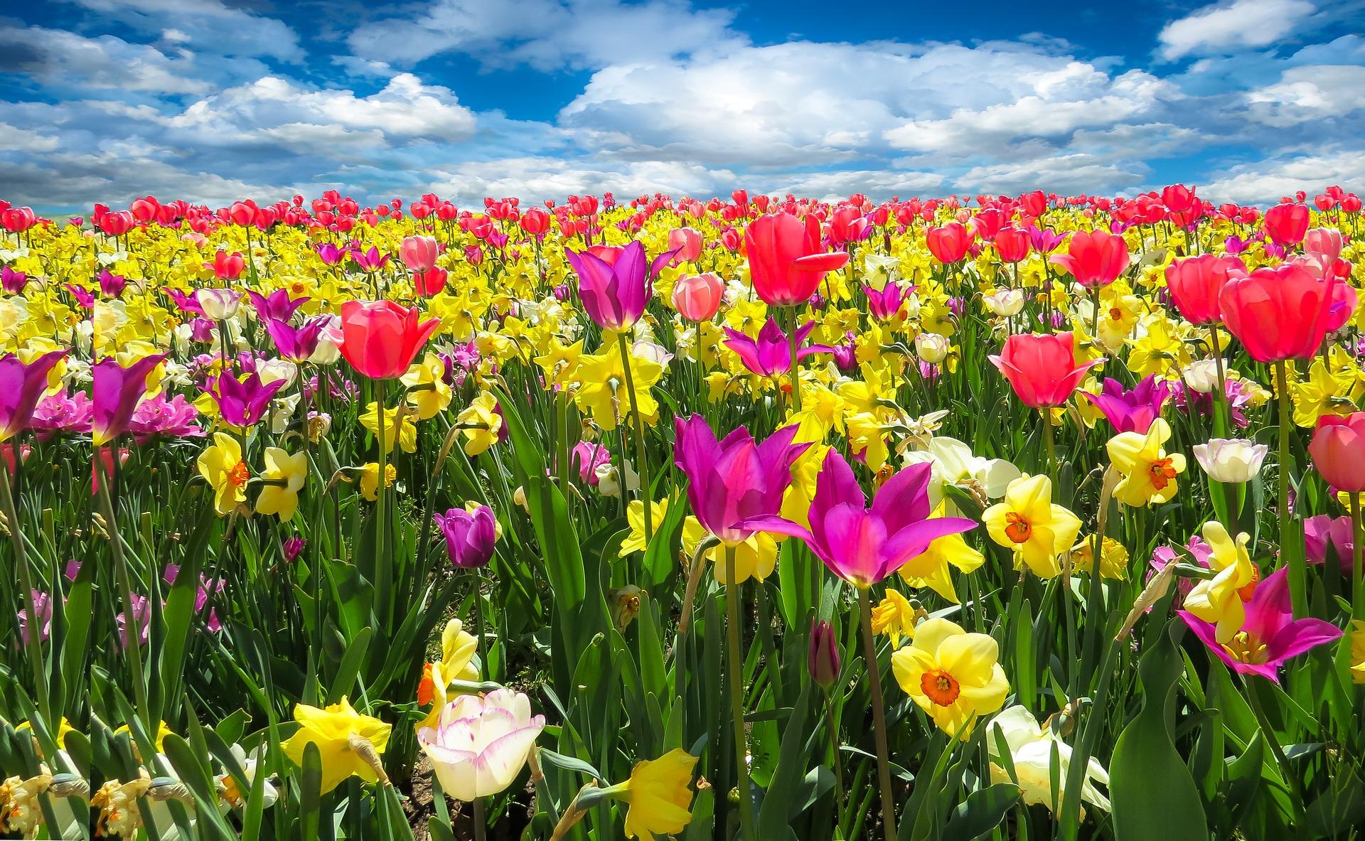 spring-awakening-1197602_1920.jpg