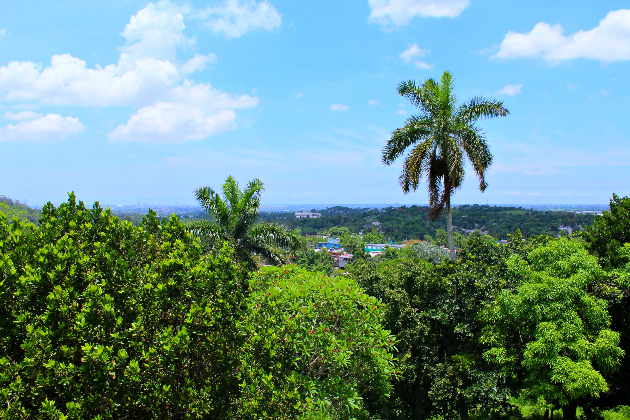 view from Hemingway's tower at his estate