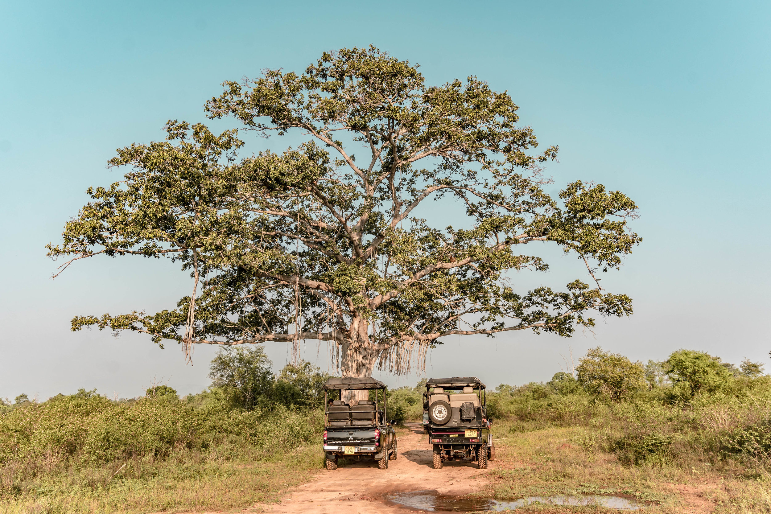 A SAFARI GUIDE TO UDAWALAWE NATIONAL PARK IN SRI LANKA