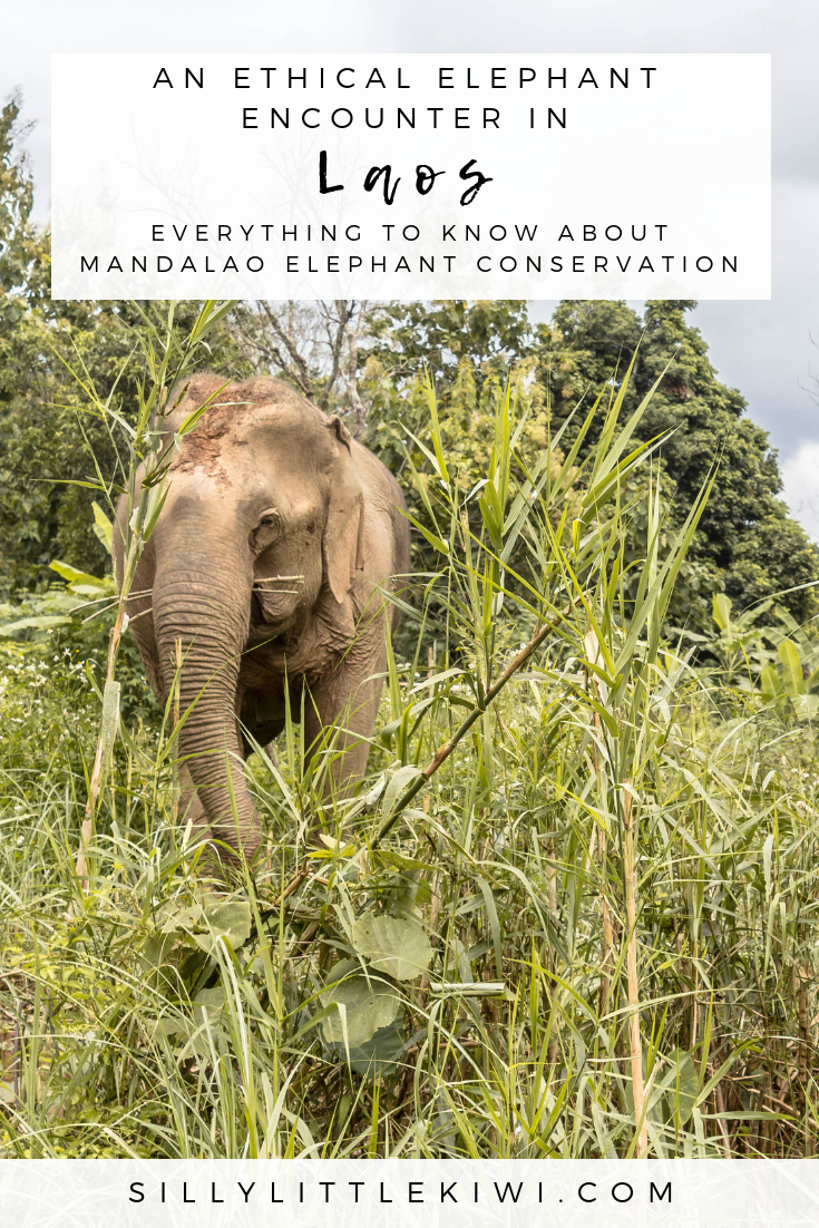 close encounters: an intimate non-riding experience with the Mandalao Elephant Conservation Project #laos #laostravel #ethicaltravel