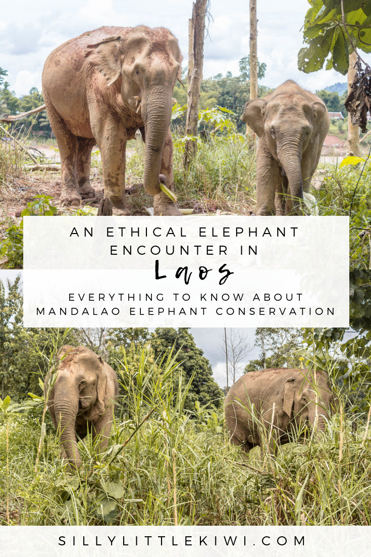 close encounters: an intimate non-riding experience with the Mandalao Elephant Conservation Project #laos #laostravel #southeastasia