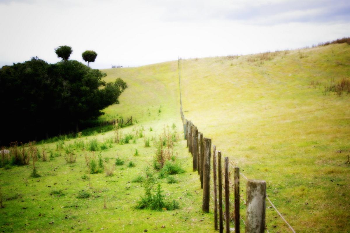 Anna_Blair-The_Fence.jpg