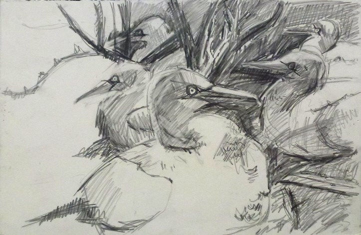 gannets_and_tree_drawing.jpg