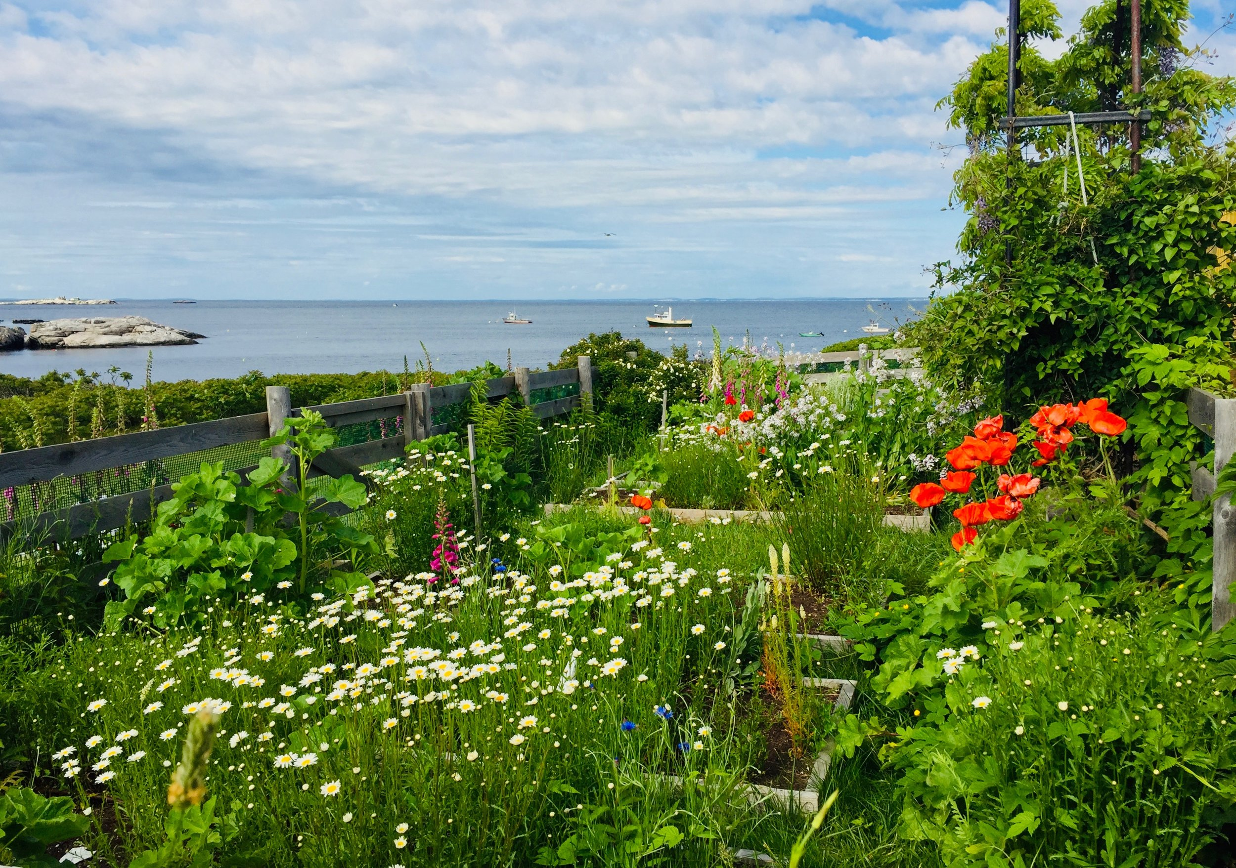 Celia Laighton Thaxter's Garden, Appledore Island. Photo by Naila Moreira.