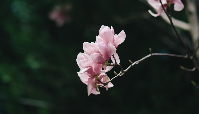 flowers0002.jpg