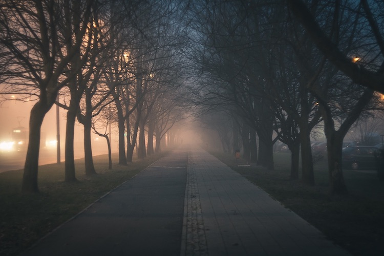 Road Amidst Bare Trees_blog.jpg