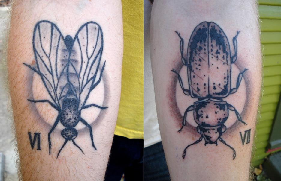 bugs1.jpeg