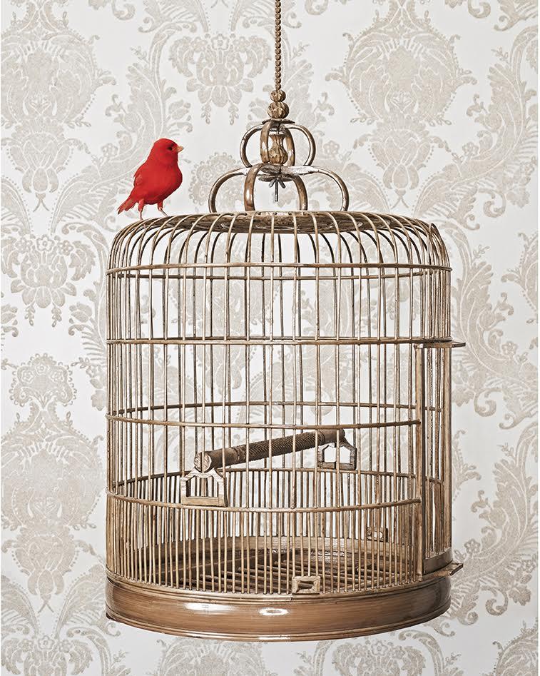 "Zachary Scott, Free Bird, 14"" x 11"""