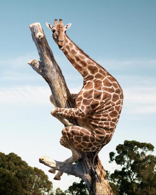 """Electric Art, Giraffe, 14"""" x 11"""""""