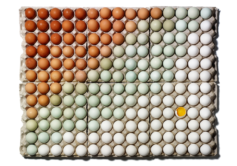 "Sam Kaplan, Eggs, 28"" x 36"""