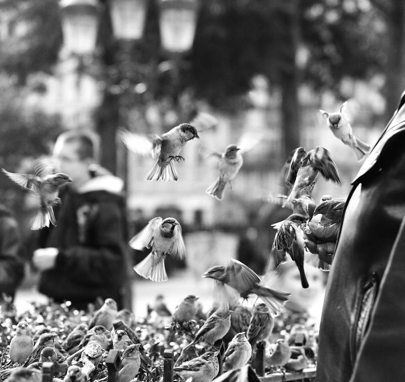 """Sara Remington, Paris, 12"""" x 12"""""""