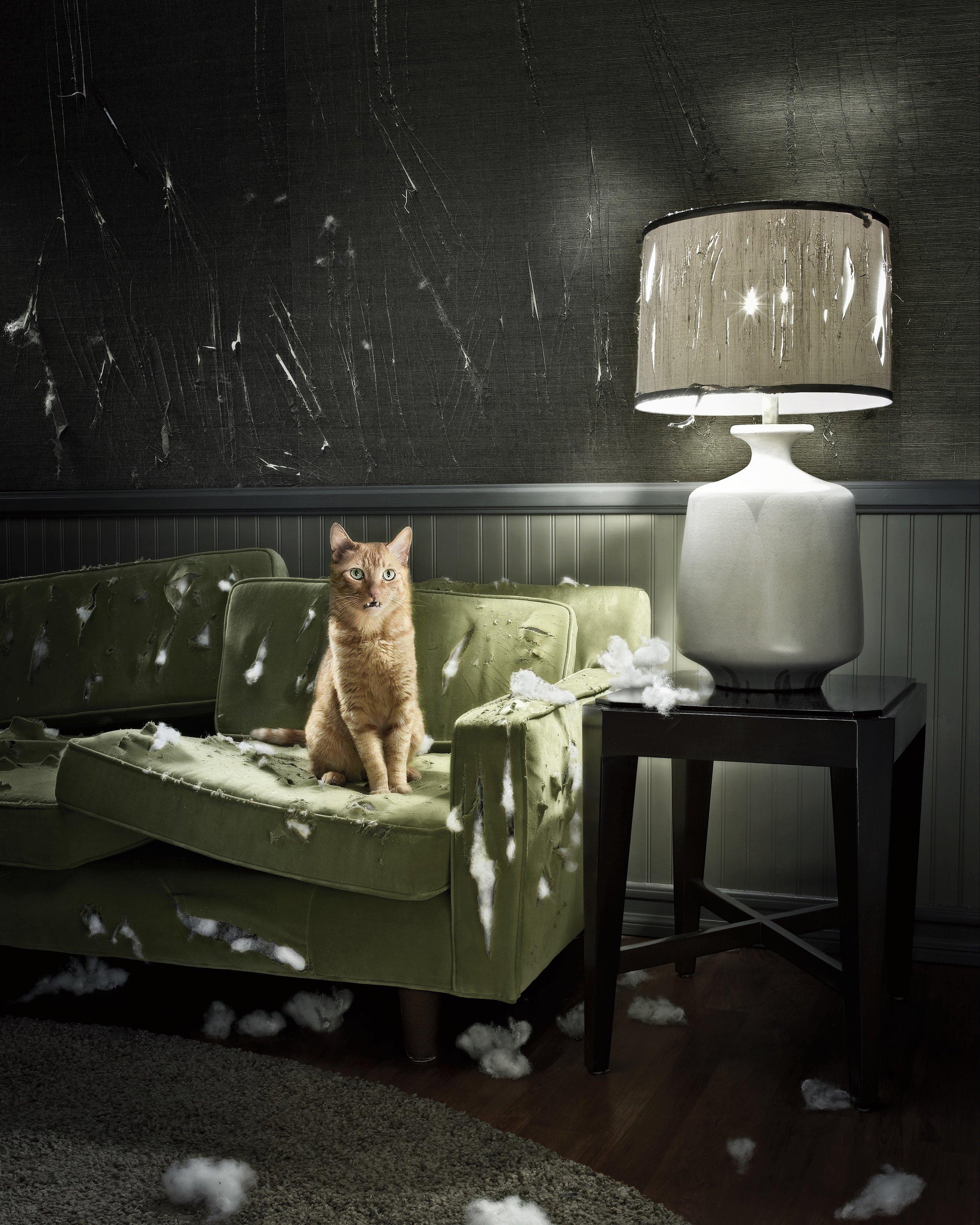 SA_Zachary Scott_Cat Couch.jpeg