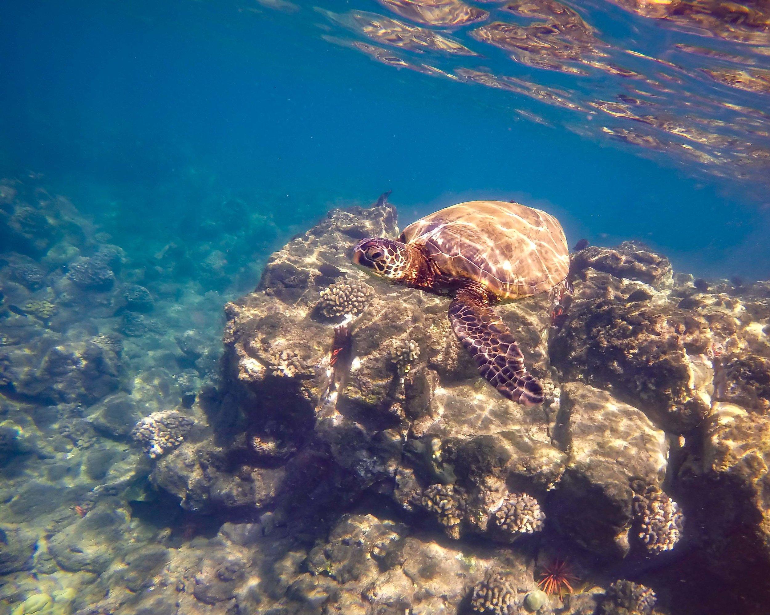 sea turtle2.jpg