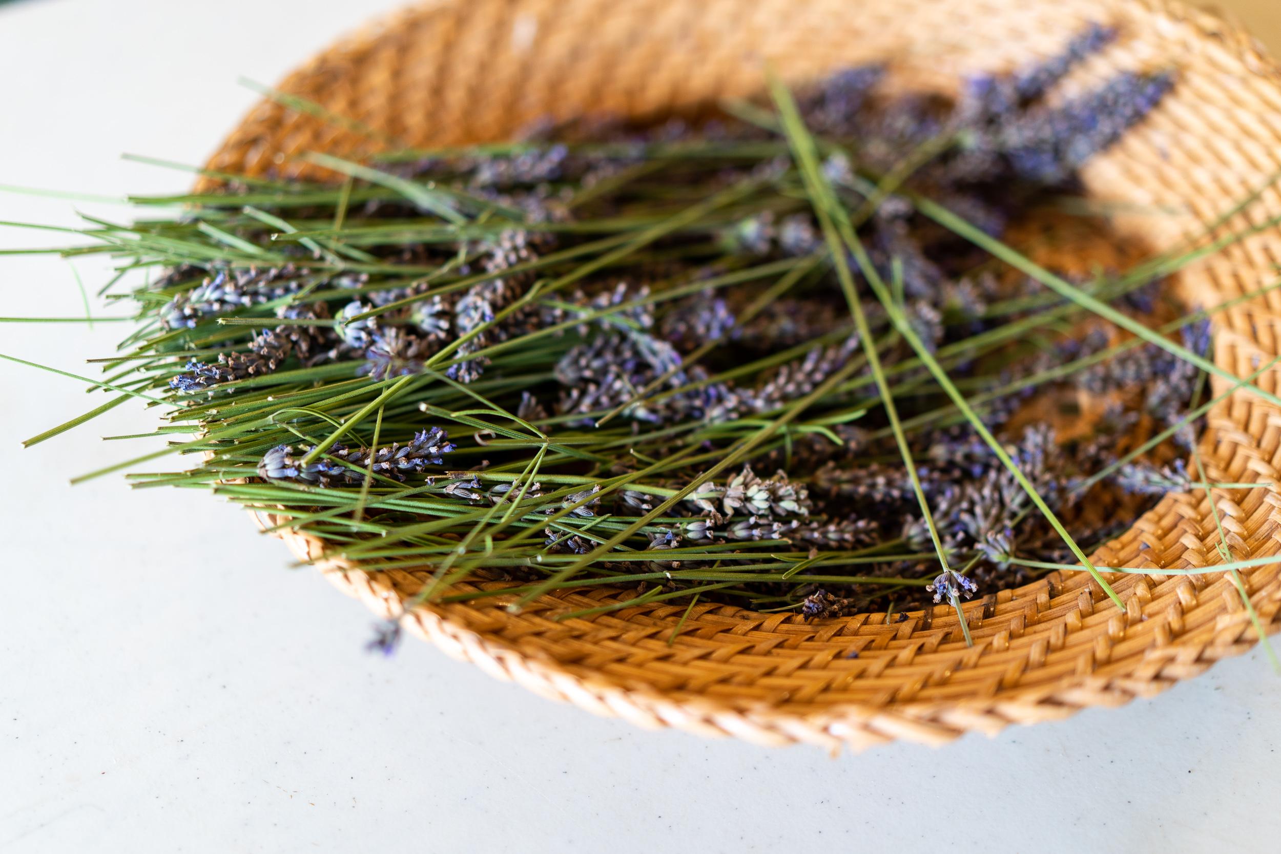 Okanagan Lavender and Herb Farm X Pendulum Magazine Travel Series
