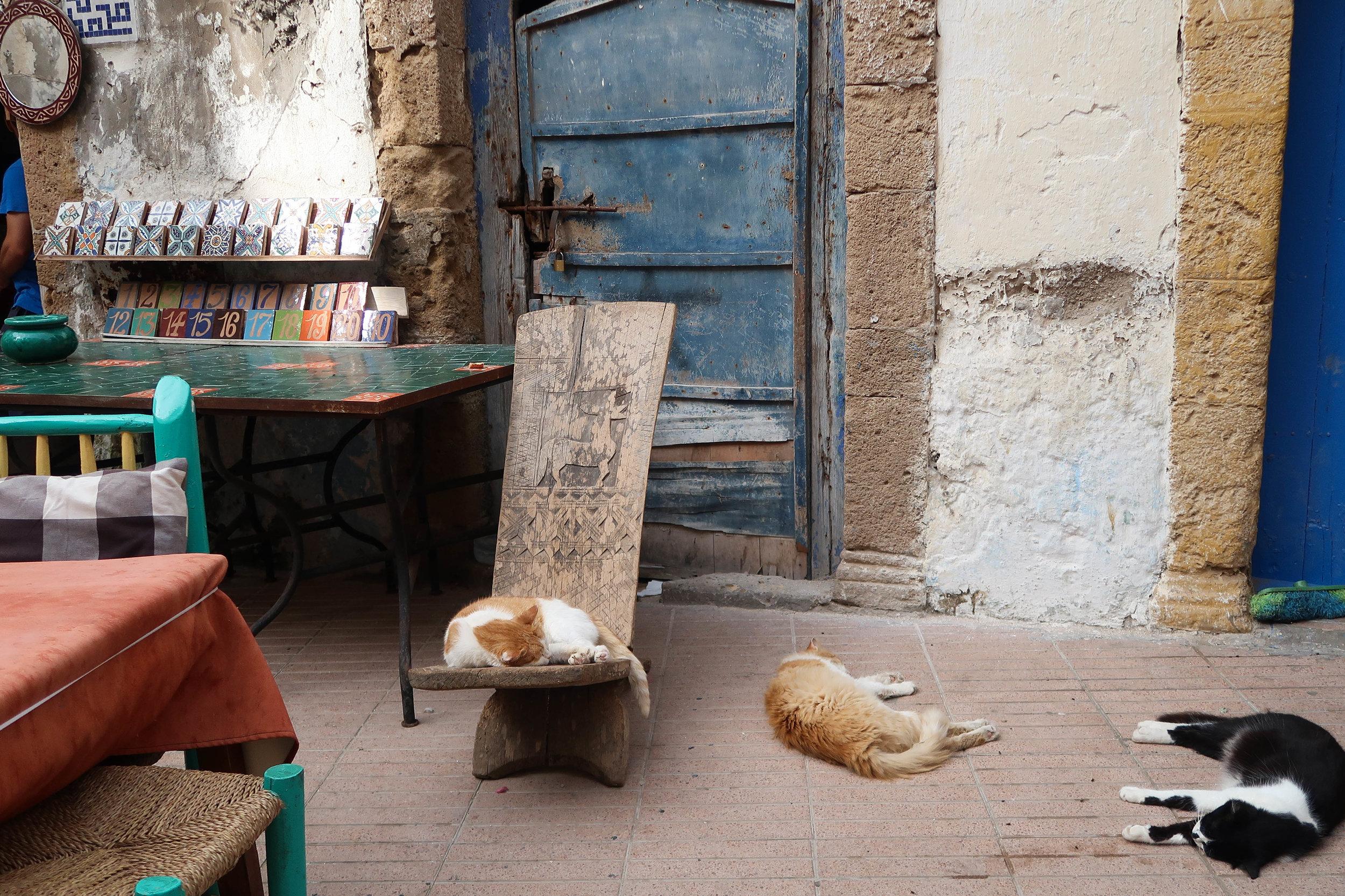 Nap time in Essaouira.