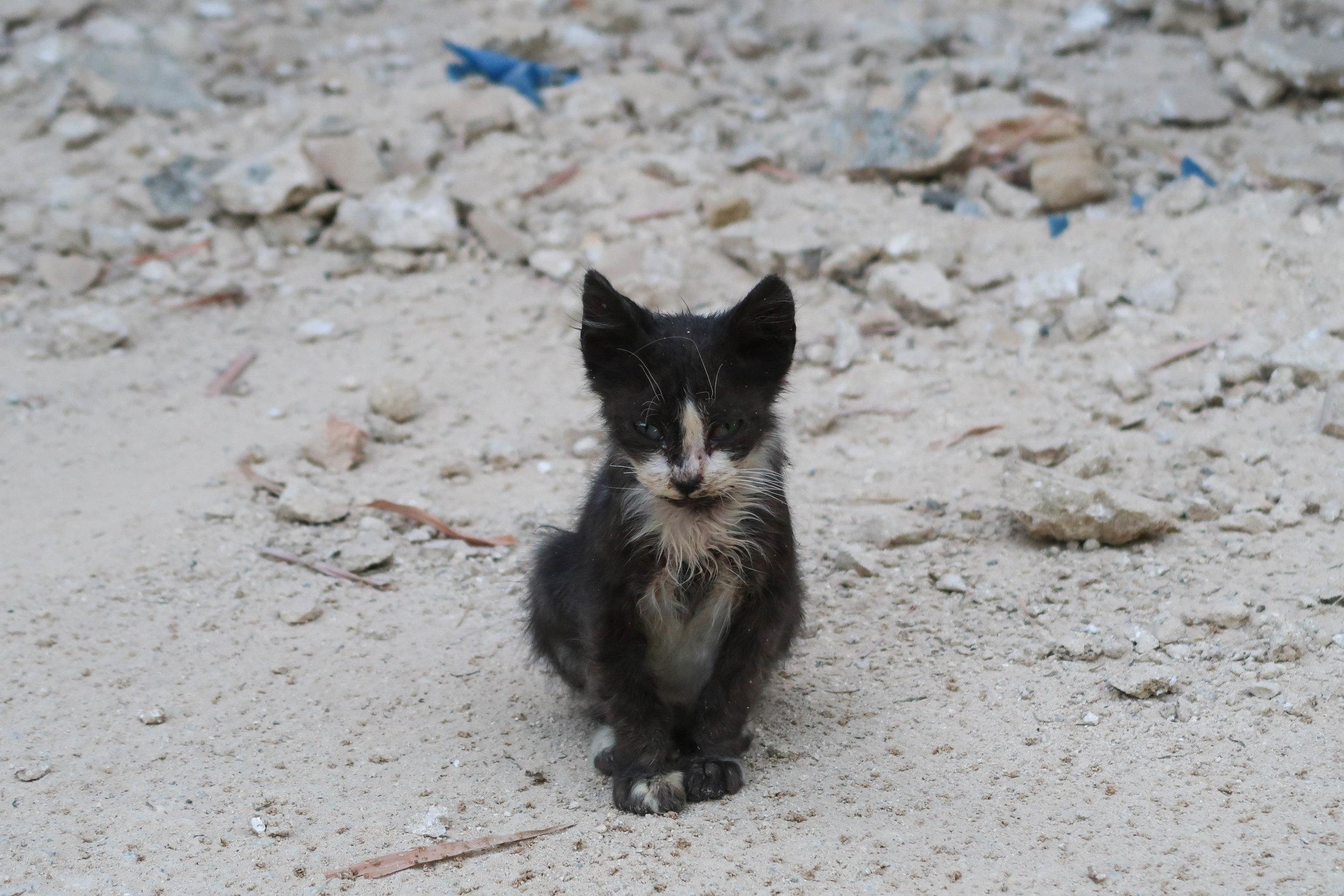 Kitten in Meknes.