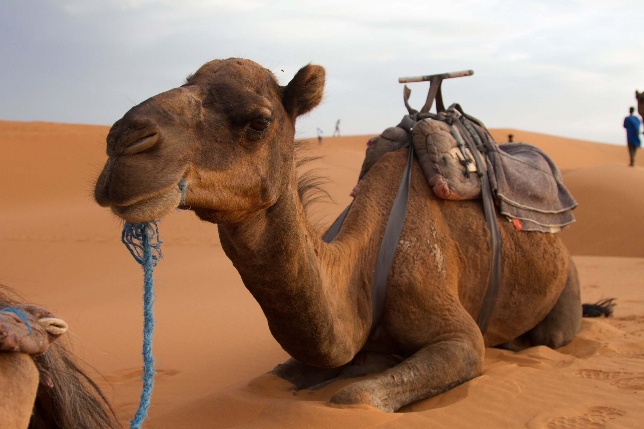 Our friendly camel resting while we climb the dunes to watch the sunset