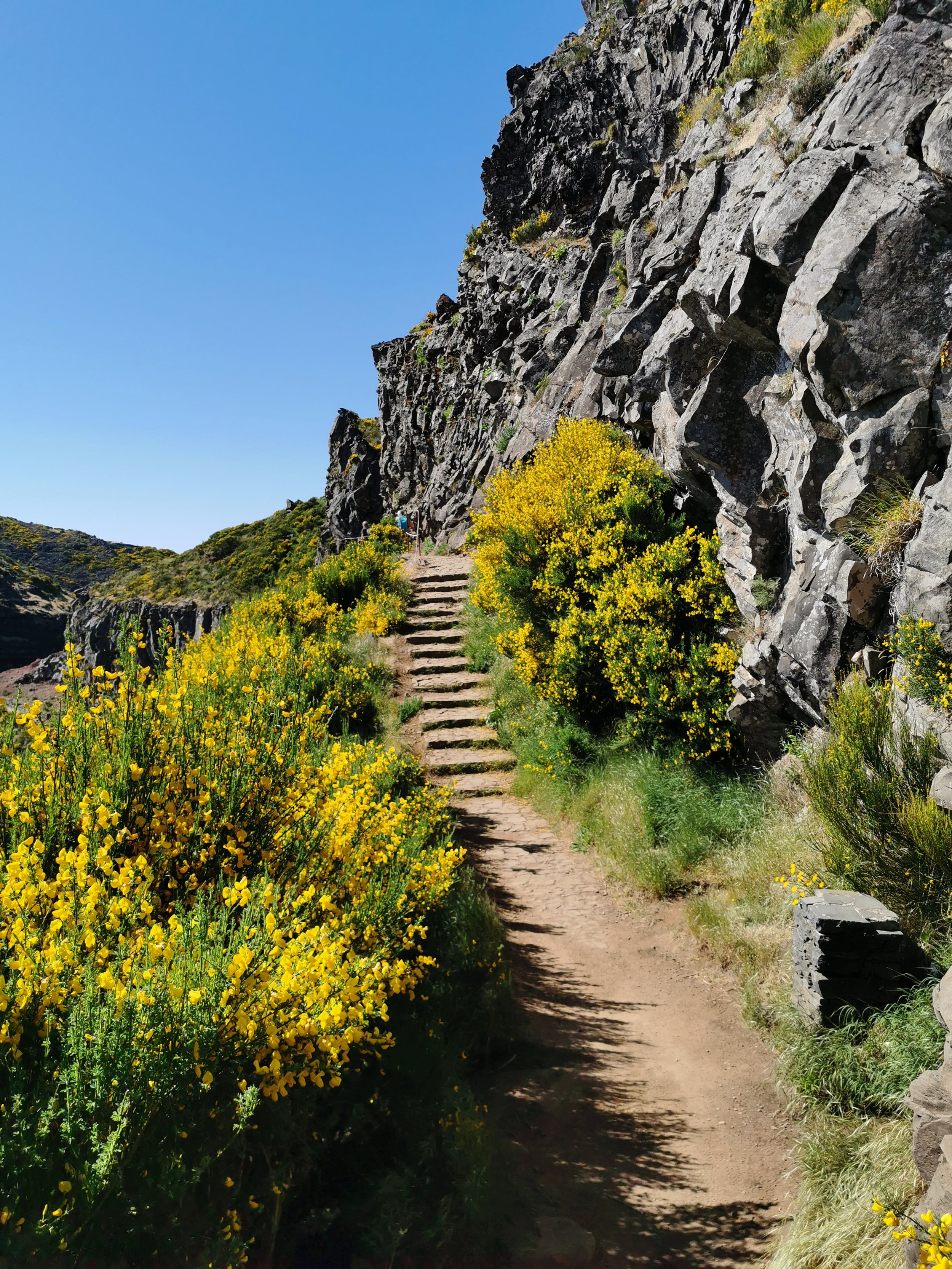 Beautiful paths lined with bright yellow flowers covering the sides of the mountains.