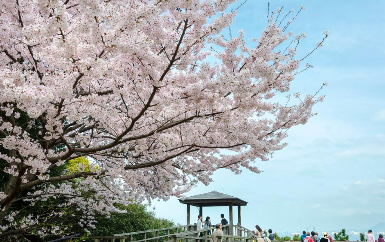 NISHI PARK JAPAN CHERRY BLOSSOM (C) JNTO