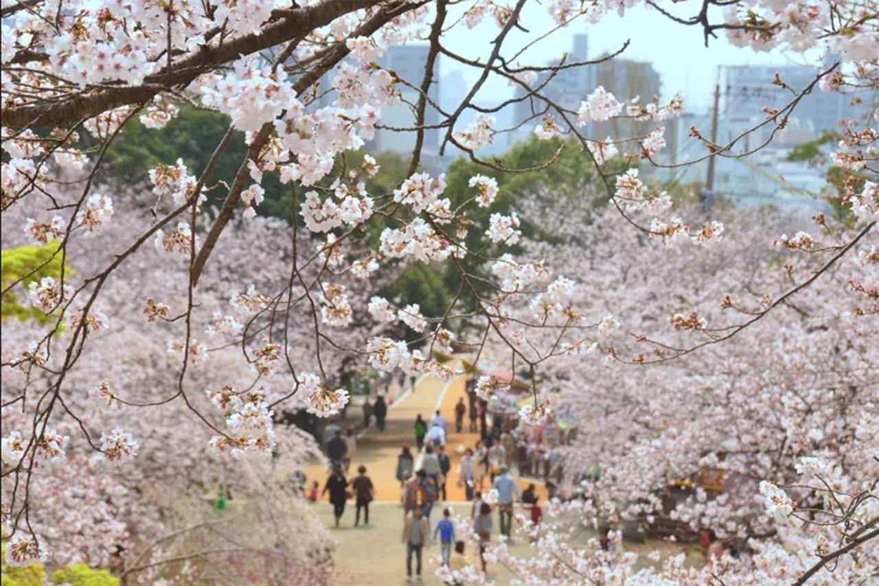 NISHI PARK 2 ©JNTO