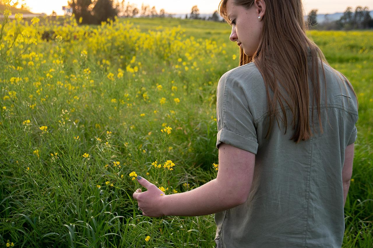 Quiet fields of Sonoma Valley.