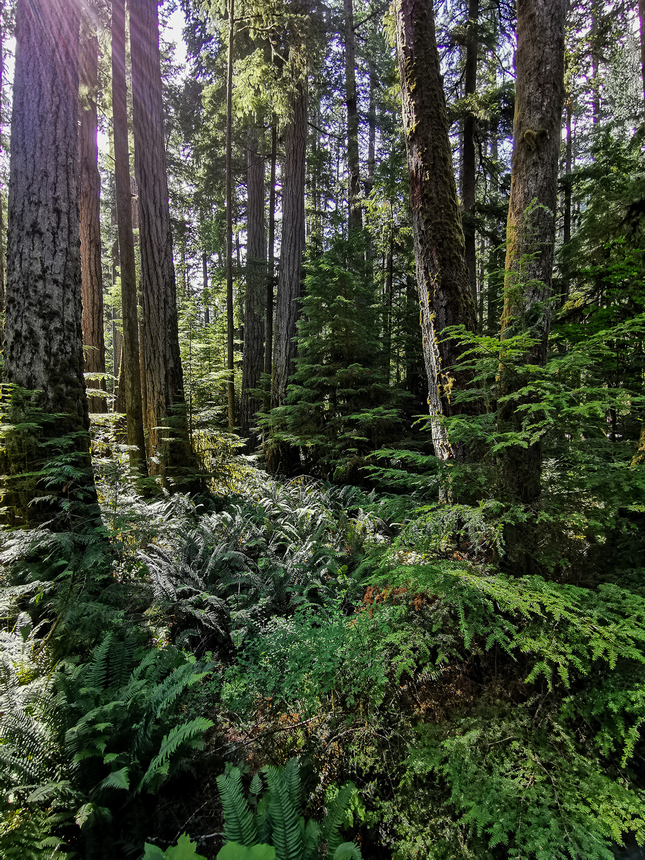 Cathedral Grove Macmillan Provincial park