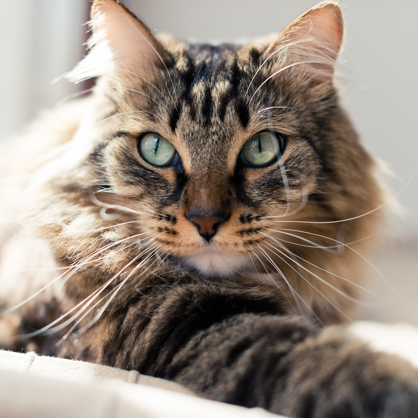 Alafaya Trail Animal Hospital has been our choice for veterinary services for over 2 years. We are quite happy with the care they show for our cat, Spot, and for us. We would highly recommend them for all of your pets' needs.  -Google Review
