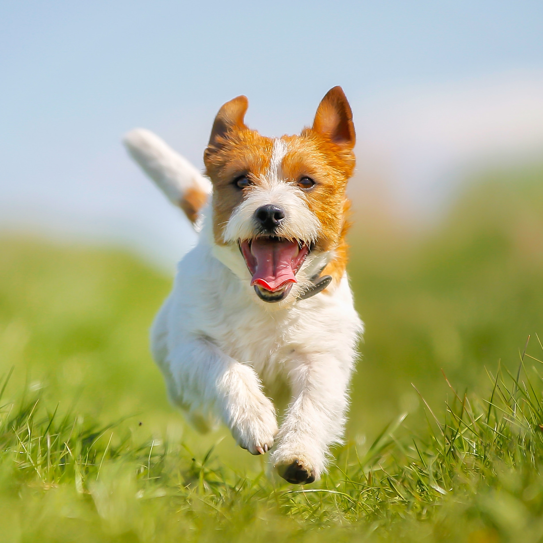 It's the better place for my pets. Doctors and all the staff are so caring and nice. I love them all. They treat my dogs so well and in a very professional way. I recommend this animal hospital 100%.  - Google Review