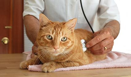 Cat Checkup.jpg
