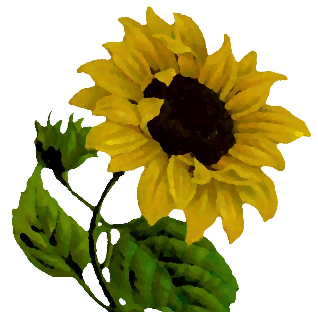 sunflower+thumbnail.jpg