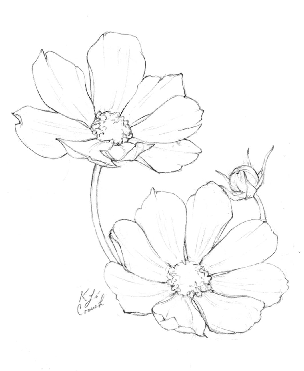 Flower Drawings Inktober 2018 Roundup Blushed Design