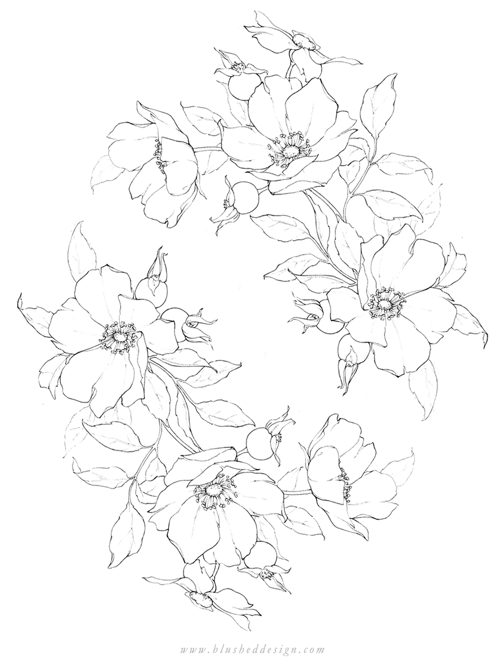 There's something so romantic and free about Wild Roses!  Wild rose botanical illustration featuring a whimsical wreath arrangement.  Beautiful pencil flower drawing by Katrina of Blushed Design. #floraldrawing #flowerdrawing #botanicalillustration #wildroses