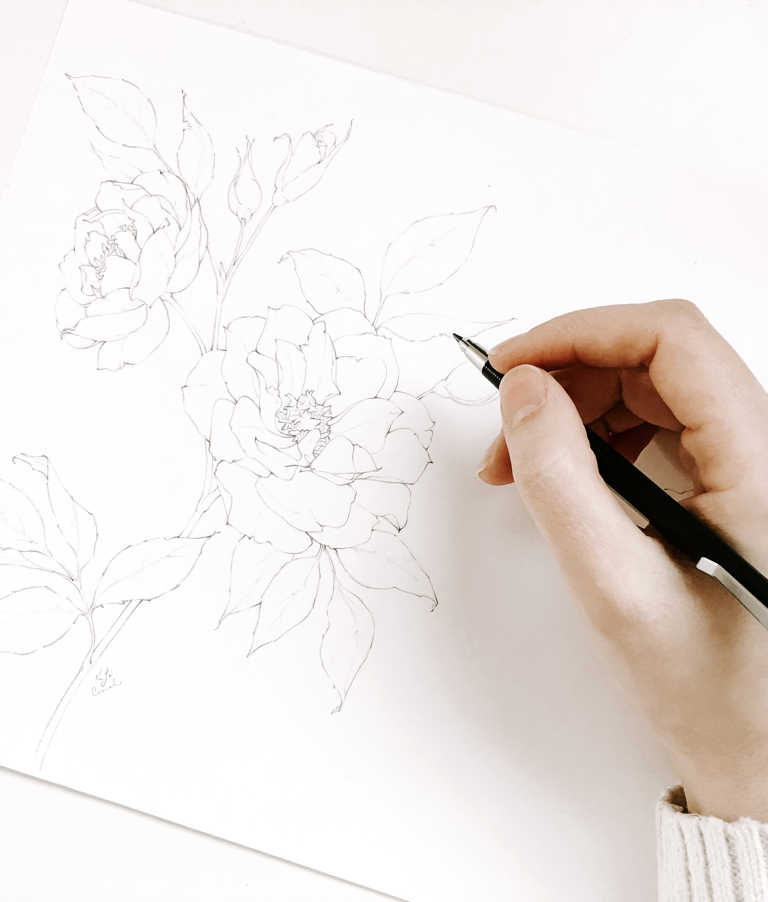 Artist drawing a realistic flower.  Drawing supplies for artists - professional and new artists alike will love these art supplies.  The best drawing pencils, erasers and watercolors for realistic botanical art. #flowerdrawing #botanicalillustrations