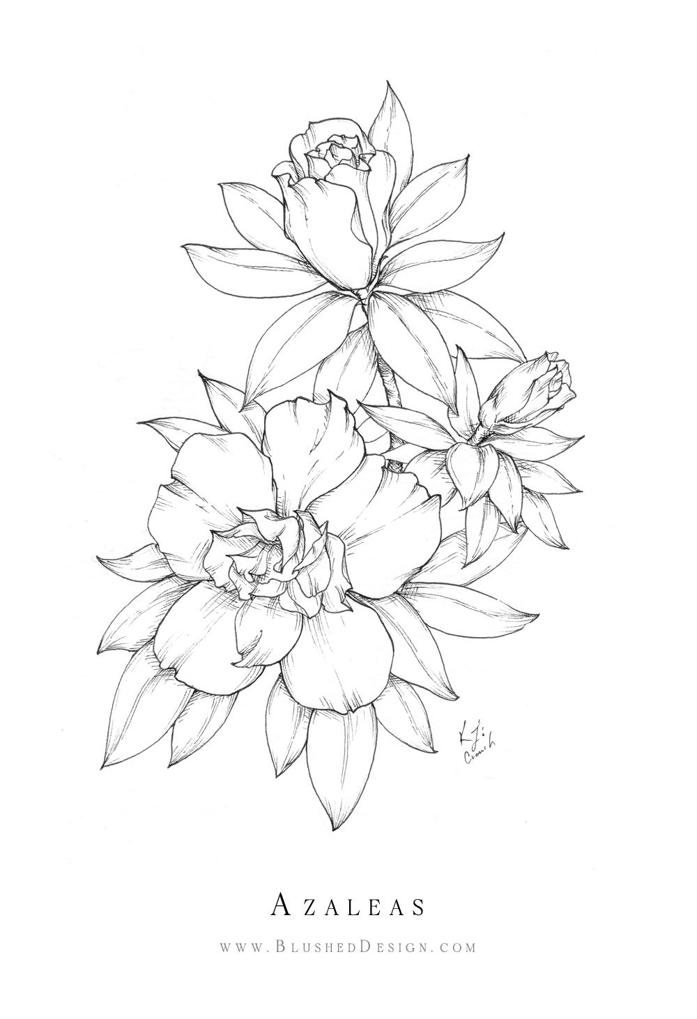 Inktober Flower Drawings 2019 Blushed Design