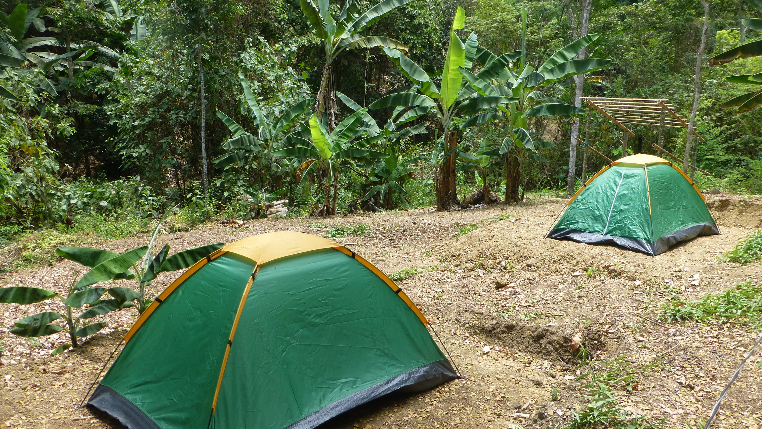 Camping area in the woods.