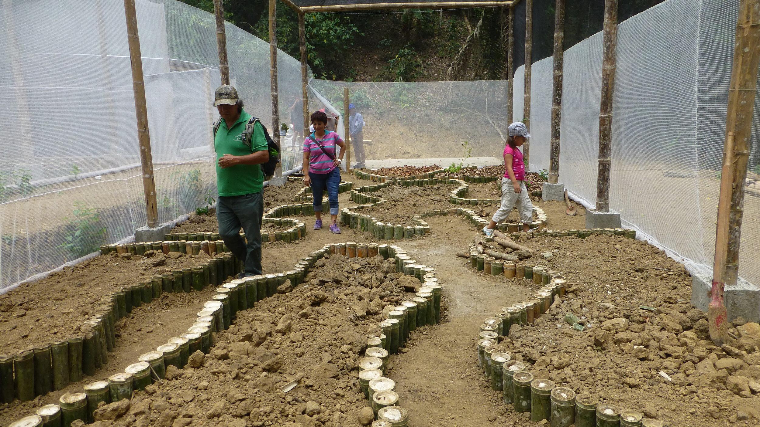 Butterfly Garden Pisloy Tataniche Ecuador