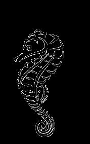 Seahorse Transparent.png