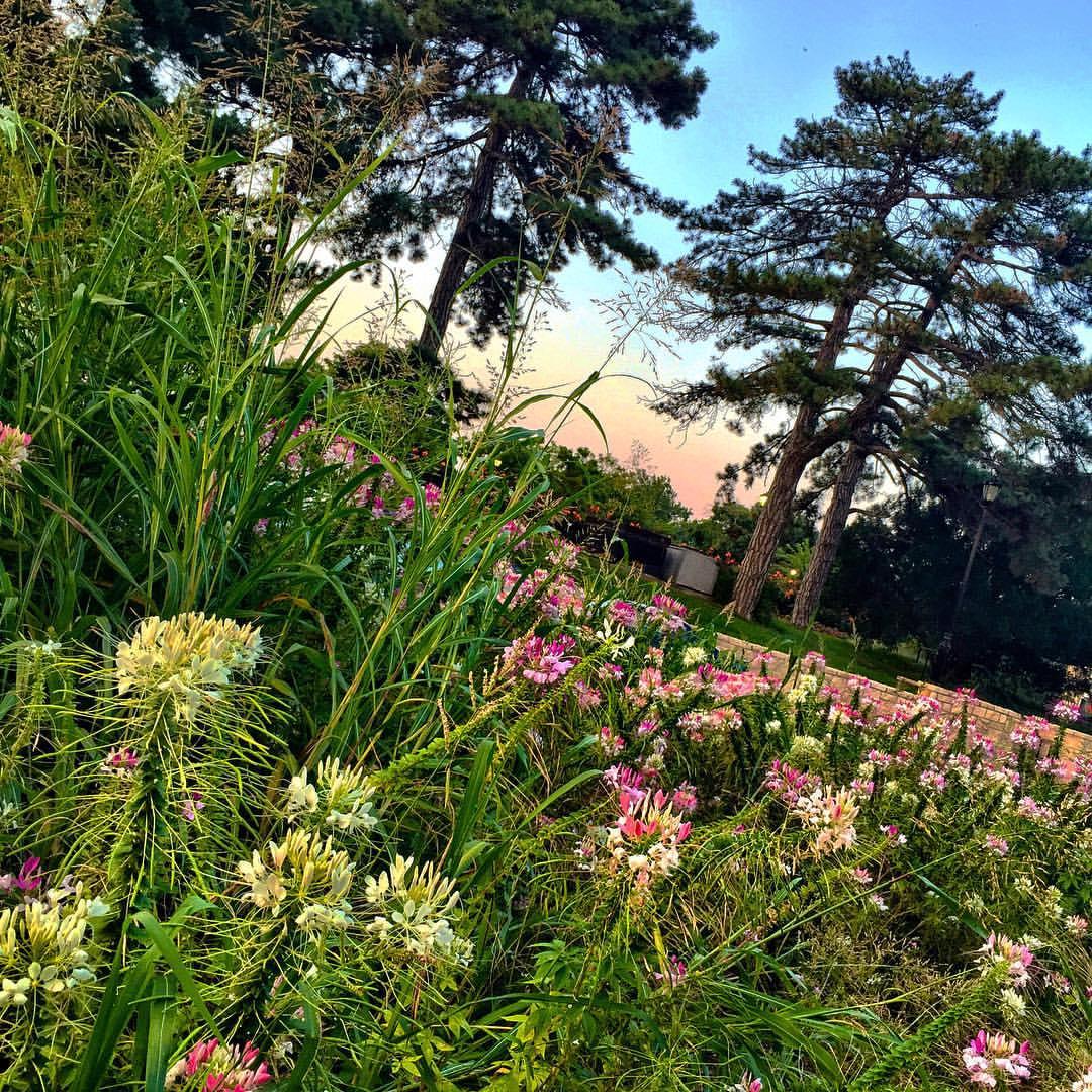 Wildflowers at Loose Park