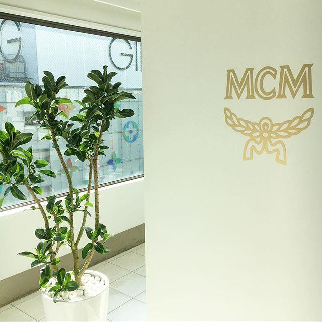 【 green coordinate 】  MCMさま。  オフィスのグリーンコーディネートを 担当させていただきました。  #グリーンコーディネート #greencoodinate  #mcm #銀座 #ginza #フラワーブランディング #cabbegeflowerstyling