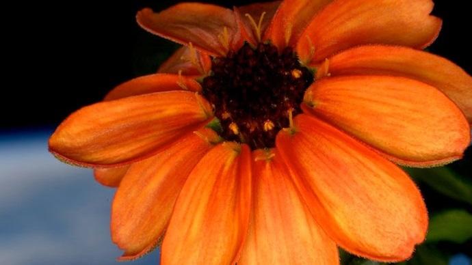first-flower-space-station01.jpg