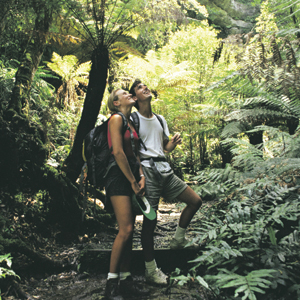 Enjoy a guided walk in the Blue Mountains National Park