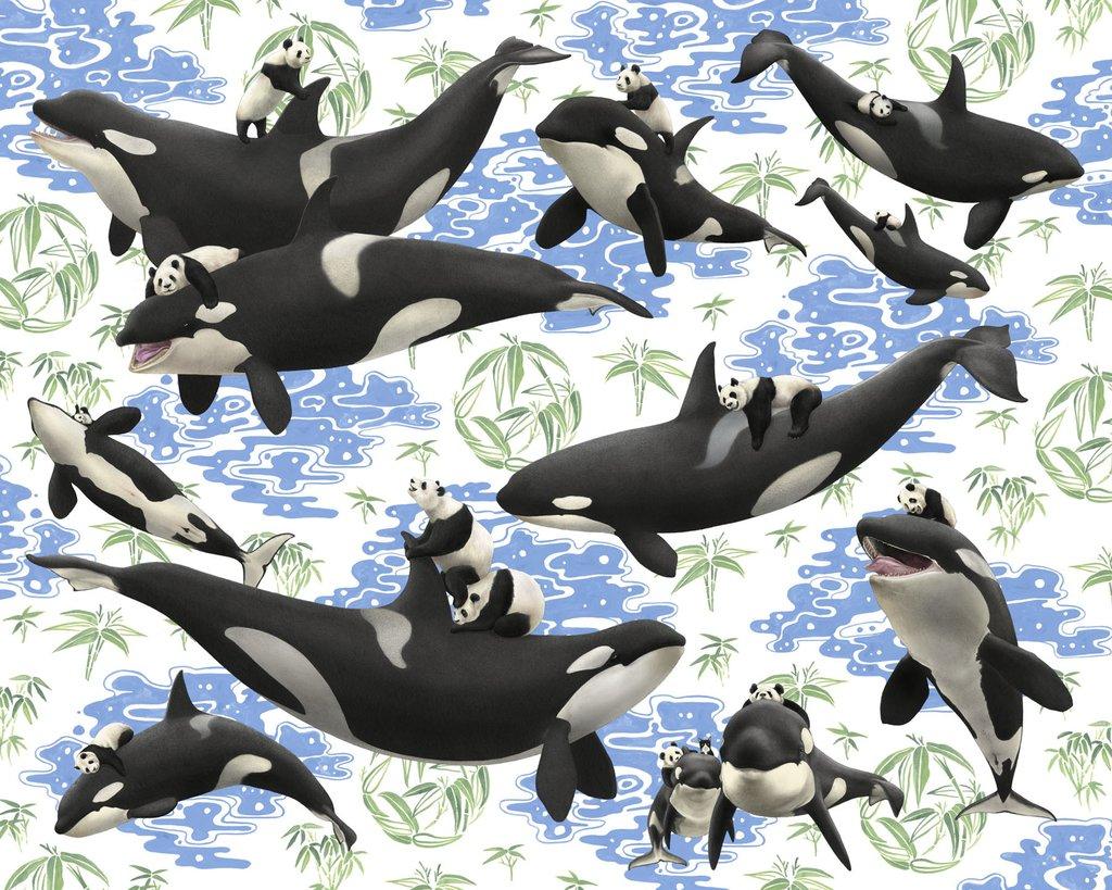 kozyndan Captives Orcas n Pandas.jpg