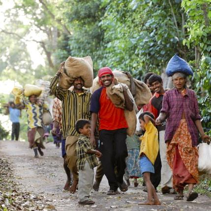 Bibi_Plantation_-_workers_-_Jan_2009_large_large.jpg