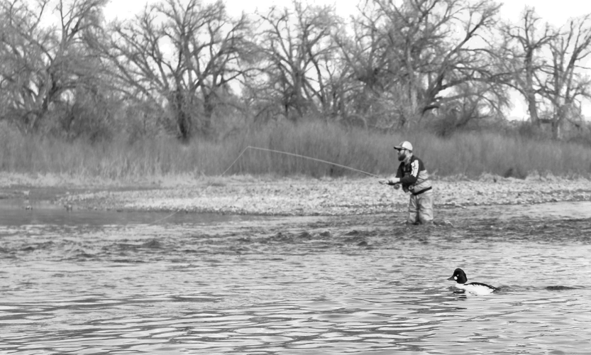Sam fails to catch any fish on the Arkansas tailwater and is mocked by ducks Photo by Jeffrey Stutsman