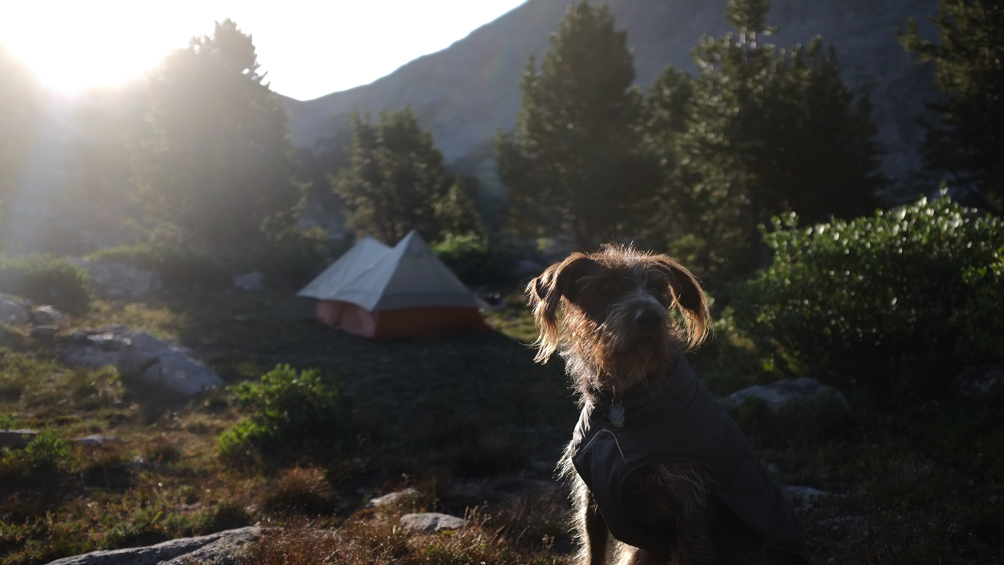 Baxter at camp in the wind rivers