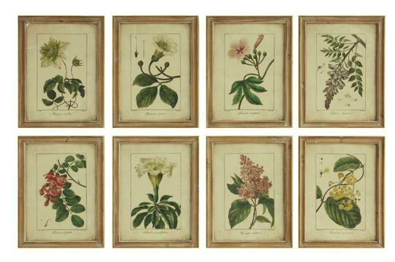 Set of 8 reproduction botanical prints framed in distressed wood frames, can order